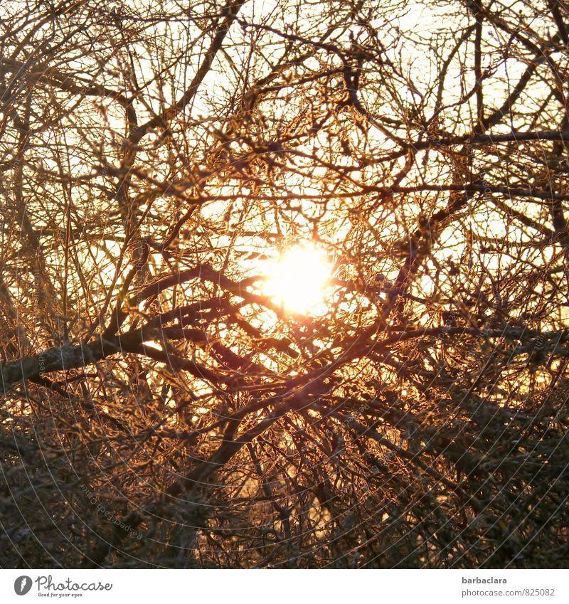 Lichtblick Natur Himmel Sonne Schönes Wetter Pflanze Baum Sträucher Geäst Linie leuchten Stimmung Kraft Geborgenheit Warmherzigkeit bizarr Energie Gefühle