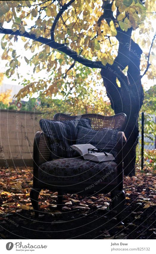 Mon Repos Freizeit & Hobby lesen Sonnenaufgang Sonnenuntergang Herbst Pflanze Baum Sträucher Blatt Denken kuschlig Warmherzigkeit Sessel Garten antik Antiquität