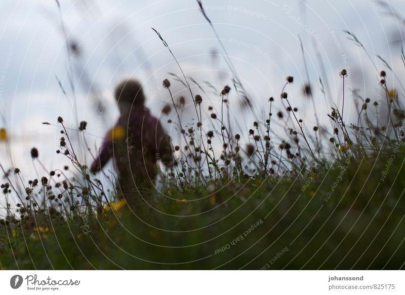 Die Welt entdecken Mensch Kind Natur Pflanze Erholung Freude Wiese Gras Spielen Freiheit Gesundheit gehen Kindheit frei Fröhlichkeit Ausflug