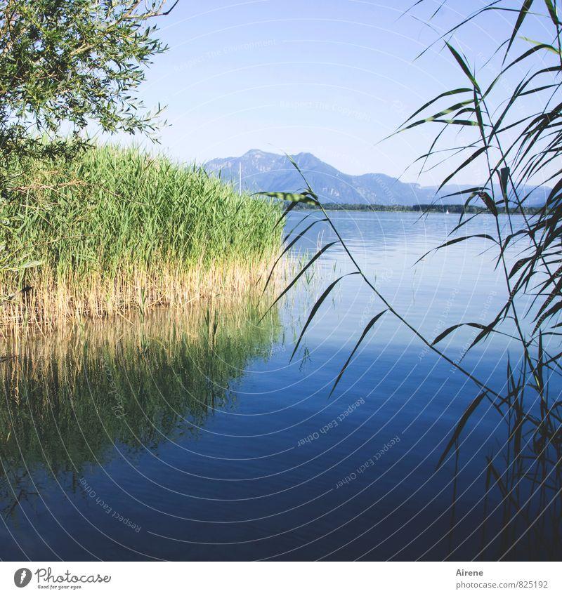 300 - Blick auf neue Herausforderungen Landschaft Wasser Himmel Sommer Schilfrohr Berge u. Gebirge Alpen Alpenvorland Küste Seeufer Bucht Insel Herrenchiemsee
