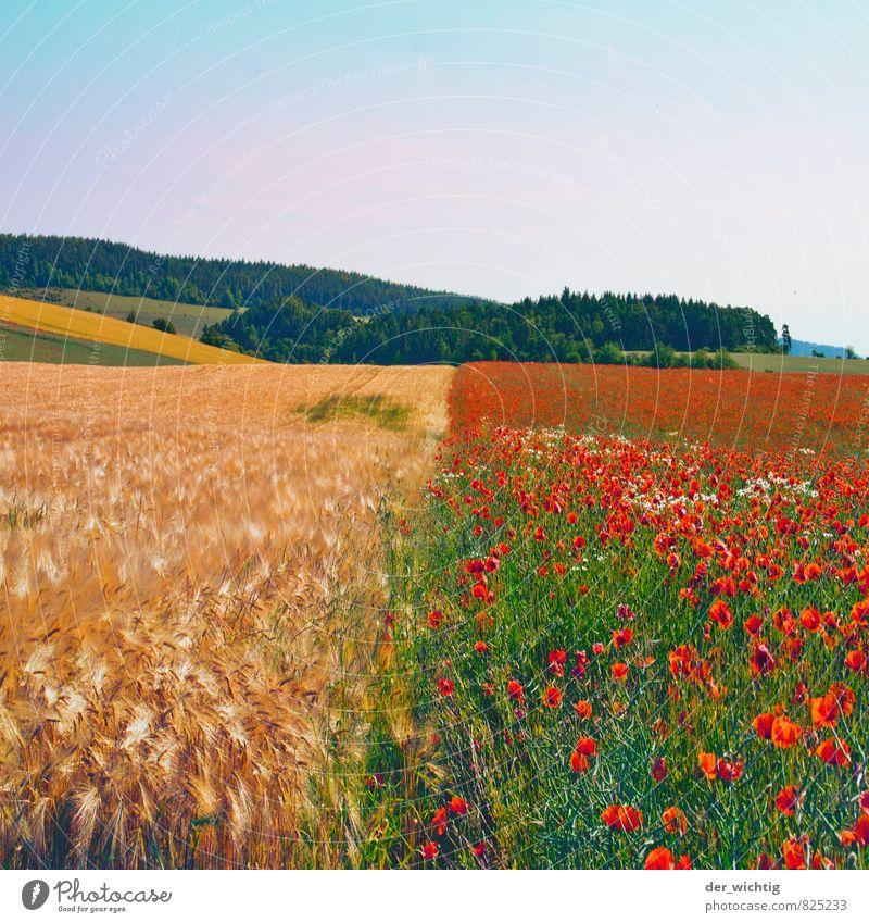 Korn trifft Mohn Ausflug Ferne Sommer Sonne Berge u. Gebirge wandern Feldarbeit Landwirtschaft Forstwirtschaft Umwelt Natur Landschaft Pflanze Wetter