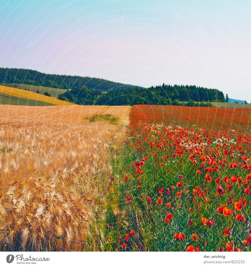 Korn trifft Mohn Natur blau Pflanze grün Sommer Sonne Erholung rot Landschaft Ferne Umwelt gelb Berge u. Gebirge Blüte Wetter Feld