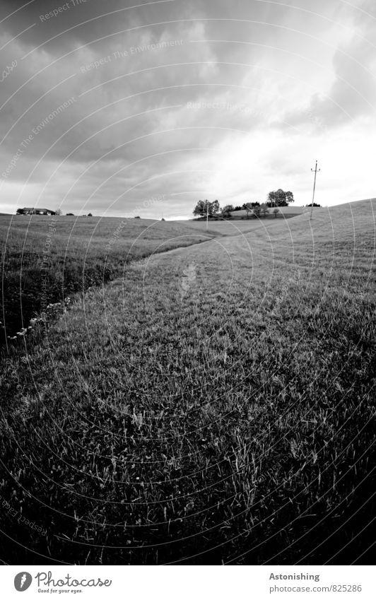 dort auf dem Hügel... Umwelt Natur Landschaft Pflanze Himmel Wolken Horizont Sonnenlicht Sommer Wetter Unwetter Wind Baum Gras Wiese grau schwarz weiß