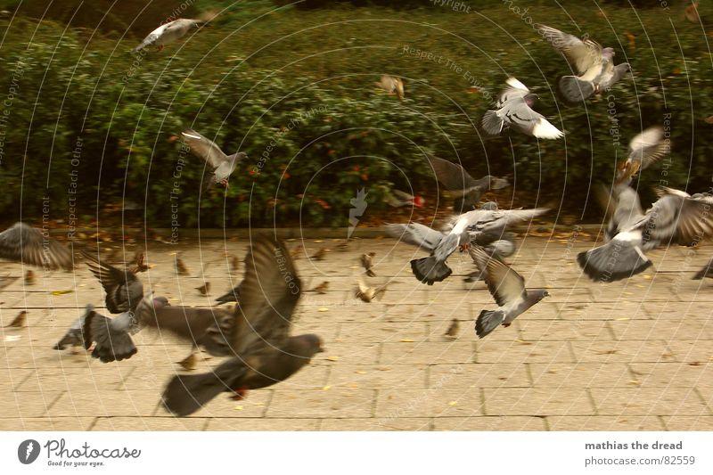 einflugscheinse grün Tier Luft Park Vogel Beginn Geschwindigkeit mehrere Luftverkehr Sträucher Flügel viele Fliesen u. Kacheln Ladengeschäft Bürgersteig