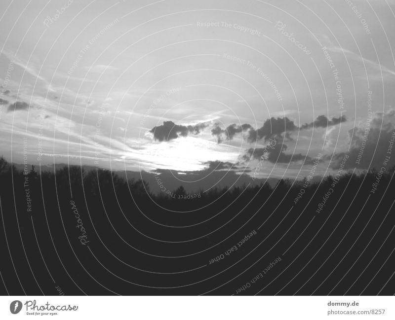 Abendstimmung S/W Wald Sonnenuntergang schwarz weiß Amerika Schwarzweißfoto