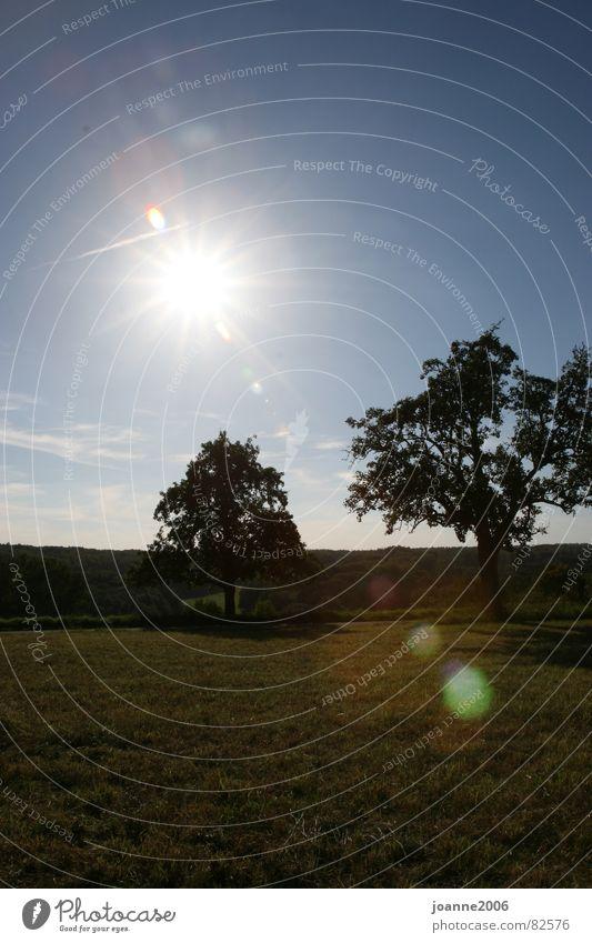 Landschaft in der Sonne Tübingen Licht Baum Wiese Reflexion & Spiegelung