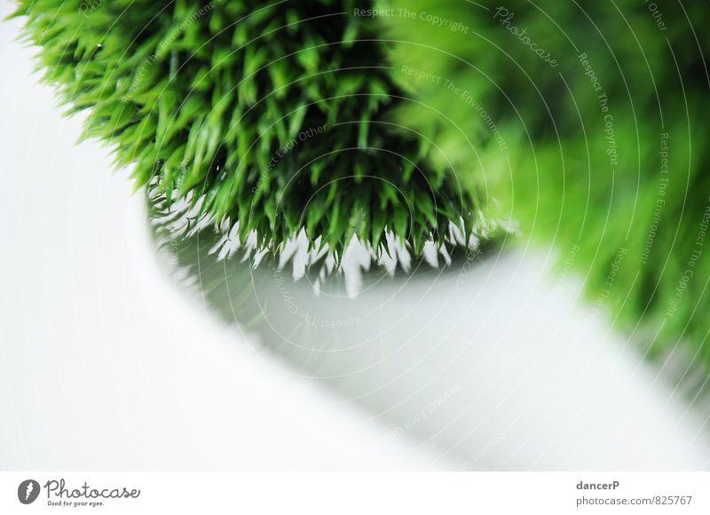 The Green Ball Blume Gras Sträucher Efeu Grünpflanze Wiese Dekoration & Verzierung außergewöhnlich grün weiß Gefühle Wahrheit Idee Kreativität skurril Dekoblume