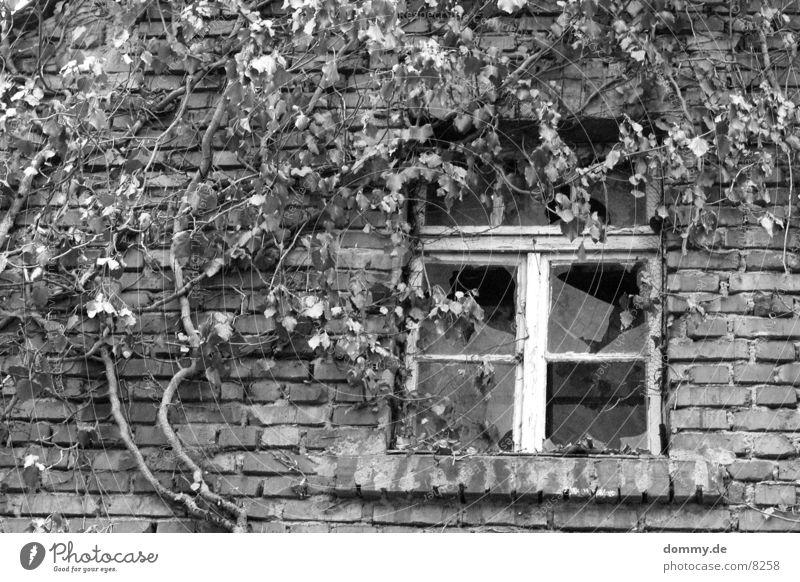 Früher... kaputt Fenster Gebäude schwarz weiß Architektur alt schwerben Schwarzweißfoto