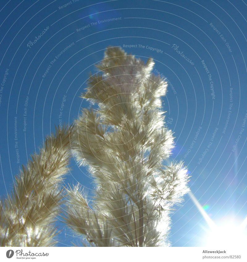 Sommer oder Winter? (100. Yeah! ) Himmel Sonne blau kalt Gras Wärme hell Frost Physik Klarheit heiß trocken Schönes Wetter blenden