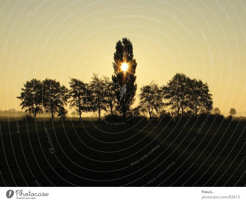 Baumgruppe Degersen Natur Sonne Baum ruhig Herbst Feld Idylle Stern Stern (Symbol) Romantik Spaziergang Kitsch Heimat Himmelskörper & Weltall Niedersachsen Wäldchen