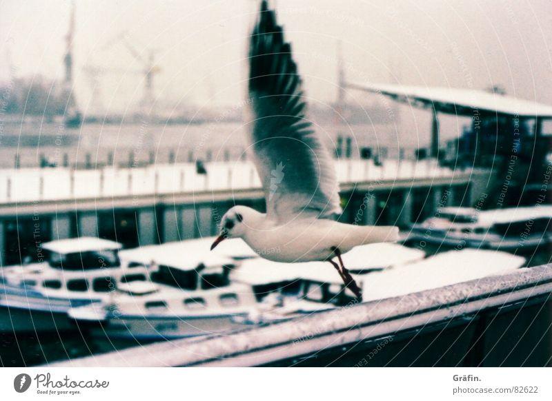 Abflug Möwe Xpro Wasserfahrzeug Anlegestelle Vogel Abheben Schnabel Lomografie Lachmöwe Hafen Hamburg Eis Schnee cross fliegen Feder Ausflug