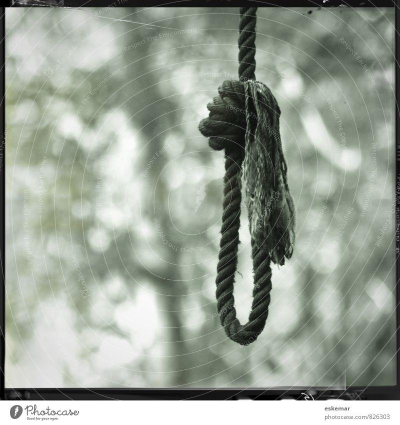 Strick Seil Schlinge Schlaufe Baum Wald Knoten Traurigkeit authentisch retro schwarz weiß Gefühle Tod Verzweiflung Quadrat Rand gerahmt Galgen Selbstmord