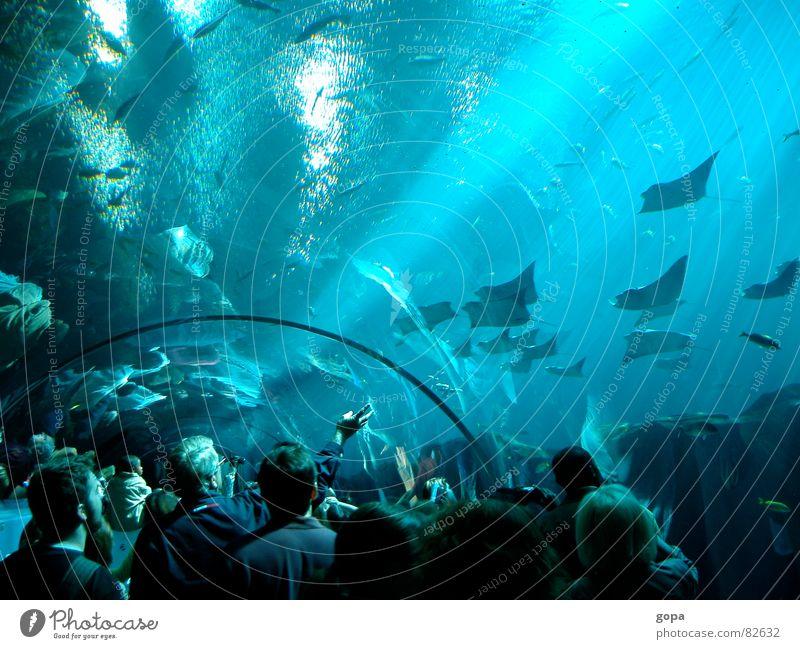 Drunter & Drüber Aquarium Meer faszinierend Wasserstraße Unterwasseraufnahme attraktiv Freizeit & Hobby Fisch Unterwasserpanorama blau Reflexion & Spiegelung