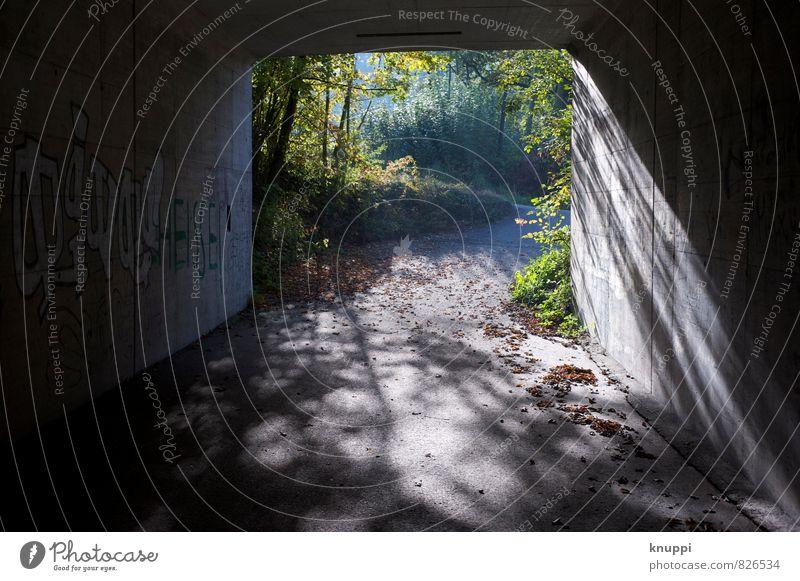 ...am Ende des Tunnels Stadt grün Sommer schwarz Wald Graffiti grau Kunst Park Design gold modern frei Beginn Lebensfreude Coolness