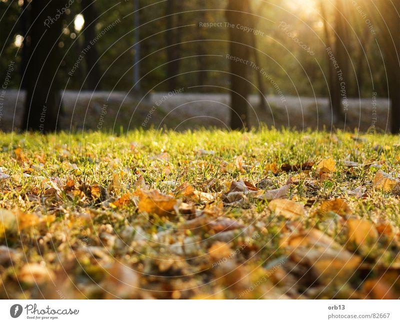 Herbst Baum grün Blatt Wald braun