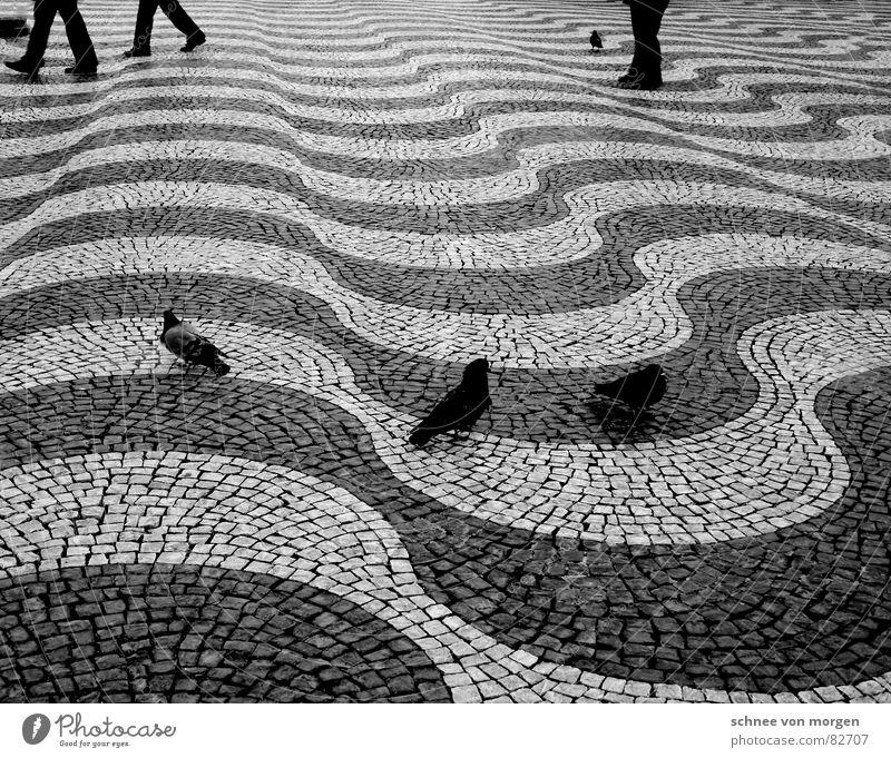 Eile mit Weile Mensch schwarz ruhig Beine Vogel Wellen gehen fliegen laufen Geschwindigkeit stehen Bodenbelag Asphalt Straßenbelag Taube
