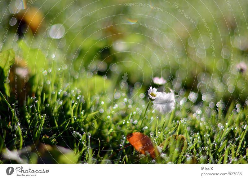 Morgentau Umwelt Natur Wassertropfen Wetter Regen Gras Wiese Wachstum frisch nass grün Stimmung Beginn Tau Halm Farbfoto mehrfarbig Außenaufnahme Nahaufnahme