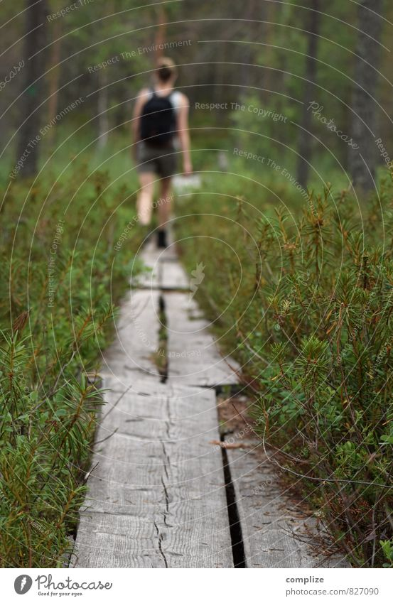 Outdoor Mensch Frau Erwachsene Umwelt Natur Landschaft Pflanze Baum Gras Sträucher Grünpflanze Wald Urwald Wege & Pfade wandern Erholung Ferne Einsamkeit