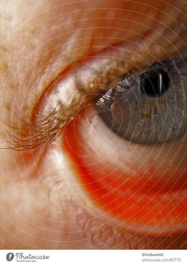 Auge Wimpern Makroaufnahme Nahaufnahme augenlied Linse augenweiß eye to eye öffenes auge