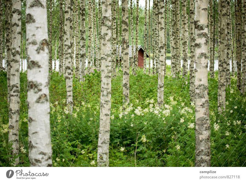 Birkenwald Gesundheit Alternativmedizin Ferien & Urlaub & Reisen Ausflug Ferne Sommer Sommerurlaub Sonne Küste Seeufer Glück Sauna Hütte Schweden Finnland