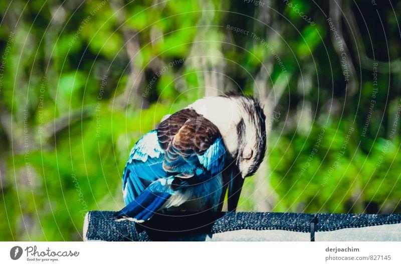 Schlafmütze Natur Ferien & Urlaub & Reisen blau schön weiß Meer ruhig Tier Umwelt außergewöhnlich braun Vogel Wildtier ästhetisch Insel genießen