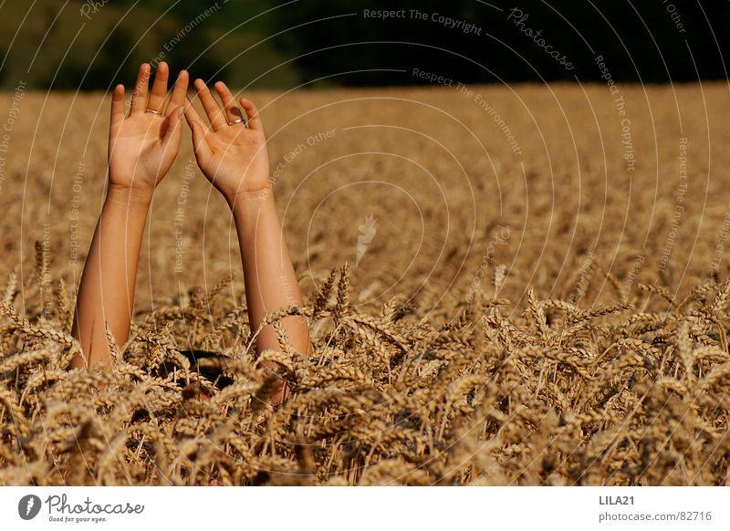 Hilfe Hand Kornfeld Weizen Feld Finger ertrinken winken Trauer Verzweiflung um Hilfe betteln Arme Hilfsbedürftig Hilferuf Hilfesuchend