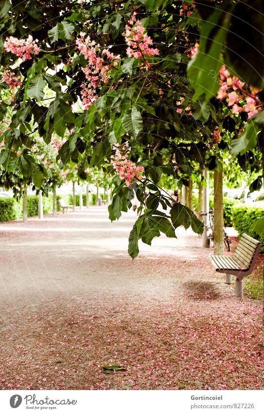 Walk schön grün Baum Blüte Frühling Denken rosa Park Schönes Wetter Blühend Parkbank