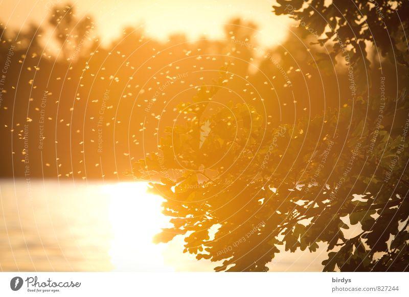 Stechmückenidyll Wasser Sonnenaufgang Sonnenuntergang Sonnenlicht Sommer Schönes Wetter Baum Seeufer Schwarm fliegen leuchten bedrohlich natürlich Wärme gelb