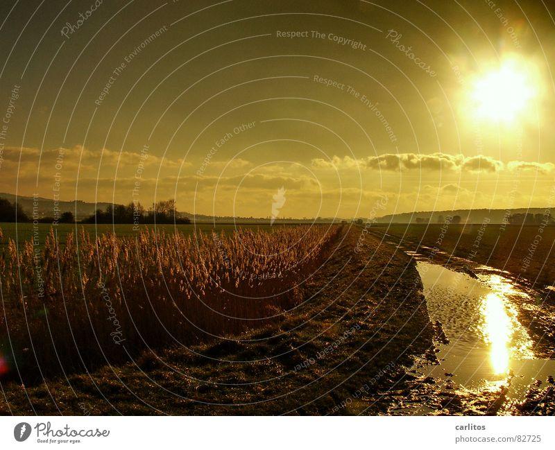Goldene Zeiten III Sonnenuntergang Weißabgleich Gegenlicht Pfütze Erholung ruhig Wiese Umwelt Herbst Weide Licht Gras Reflexion & Spiegelung blenden Dämmerung
