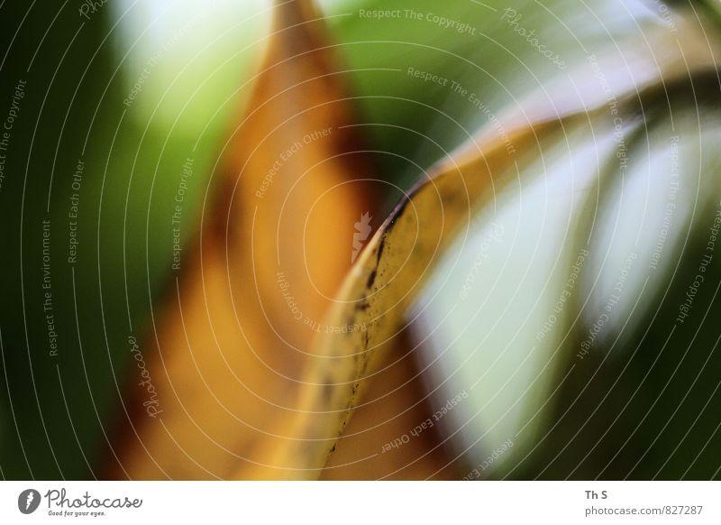 Blatt Natur Pflanze schön grün Farbe Sommer ruhig gelb Frühling orange elegant authentisch ästhetisch einfach Blühend