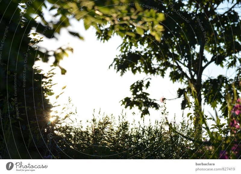 sommerlicher Rahmen Natur Pflanze Himmel Sonne Sommer Baum Blume Gras Garten Blühend leuchten Wachstum hell grün Stimmung Zufriedenheit Warmherzigkeit Romantik