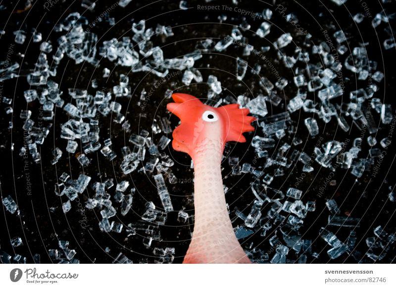 Live aus Brokechick Mountain! Gummihuhn Hahn Haushuhn kalt Gänsehaut frieren dünn Lebensmittel Spielzeug Tier Ernährung Nachbildung Gummitier Berlin-Mitte