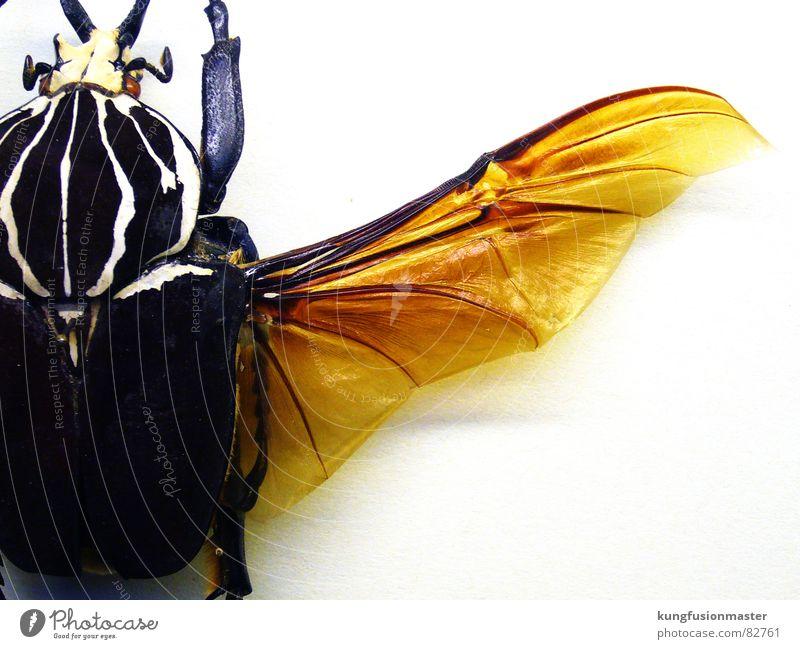 el flügel gelb orange Flügel Insekt Biene Käfer Tier schwer Schiffsbug knackig Wasserfahrzeug Spannweite