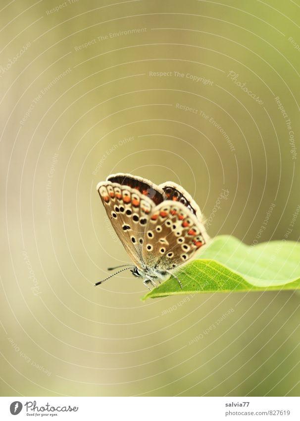Sonnenbad Natur Pflanze grün Sommer Erholung ruhig Blatt Tier Umwelt Wiese Frühling grau klein oben Stimmung braun