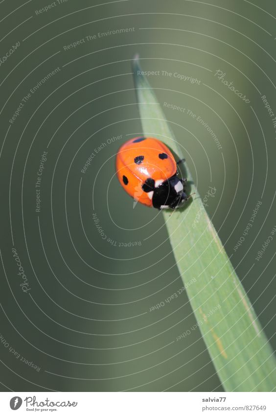 Sonnenkäfer Natur Pflanze grün schön Sommer Sonne ruhig Tier Umwelt Frühling Gras Gesundheit Glück orange Wildtier Geburtstag