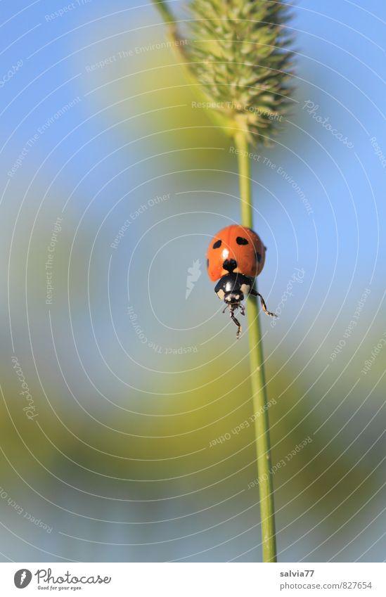 alles im Griff Natur Pflanze Sommer Tier Wiese Gras klein Glück Kraft Wildtier hoch Sicherheit fallen festhalten sportlich Insekt