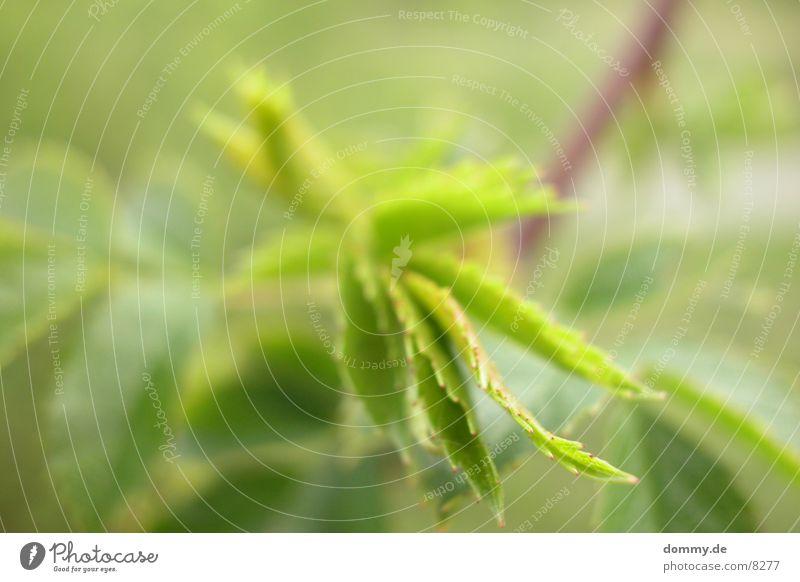grüneNATUR Natur grün Blatt Ast