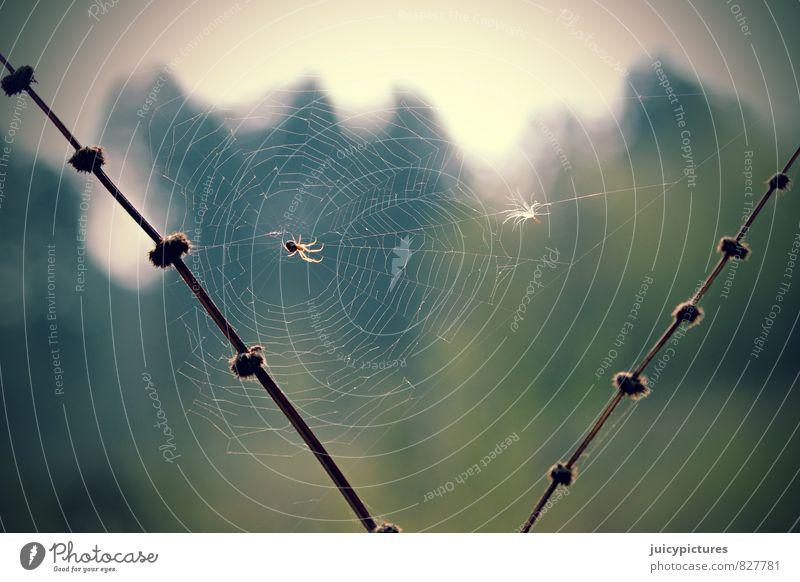 Spinnennetz Tier beobachten Erholung genießen hängen Jagd krabbeln warten Fröhlichkeit glänzend niedlich schön braun mehrfarbig grün Lebensfreude