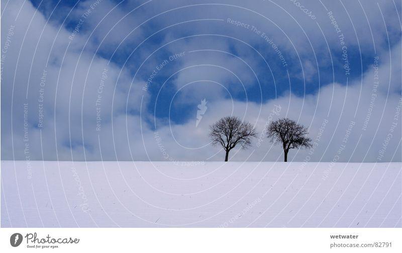 two trees (cold) Himmel Baum blau Winter Wolken Einsamkeit kalt Schnee Landschaft Eis Deutschland frisch