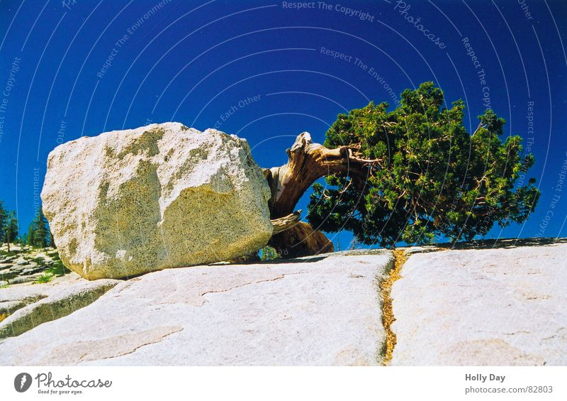 Lebenswille blau Sommer Baum außergewöhnlich Stein Felsen Lebensfreude USA skurril seltsam Blauer Himmel Nationalpark Kalifornien 2006 Yosemite NP