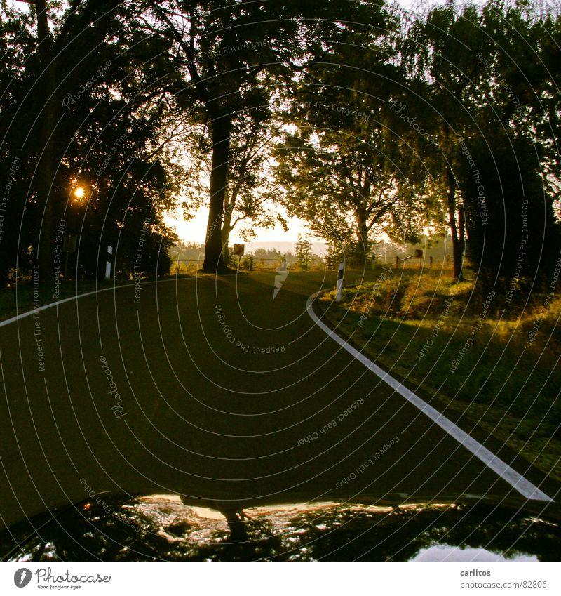 Fahrt ins Blaue Straßenrand Leitpfosten Fahrbahnmarkierung Sonnenaufgang Reflexion & Spiegelung Dämmerung Baum Landstraße Freizeit & Hobby Sommer Kurve Linie