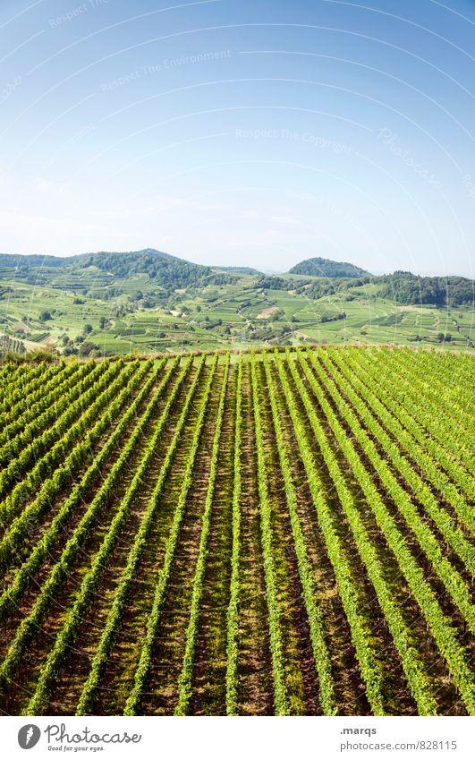 Weinbau Ausflug Landschaft Wolkenloser Himmel Horizont Sommer Herbst Schönes Wetter Pflanze Nutzpflanze Hügel Weinberg Erholung hell natürlich Natur Perspektive