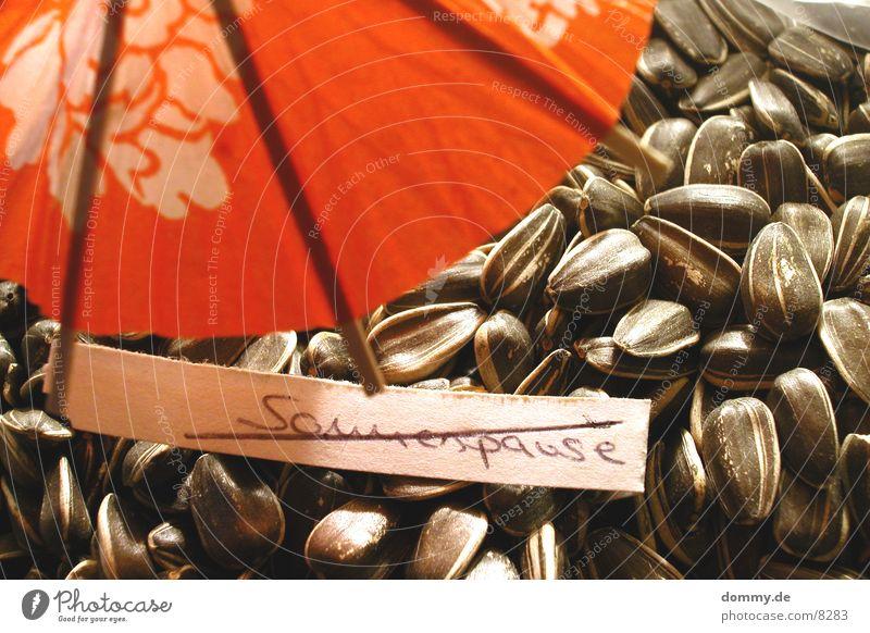 Ende der Sommerpause Sonnenblume Sonnenblumenkern Kerne Ernährung Korn Handschrift rot Makroaufnahme Nahaufnahme Lebensmittel Regenschirm