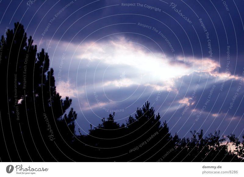 und der Himmel öffnete sich... Wolken Sonnenstrahlen Baum Baumkrone Riss