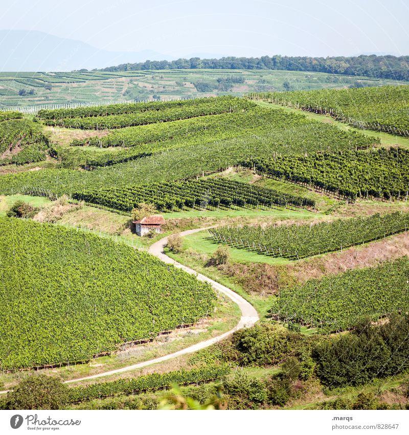 Hauswein Ausflug wandern Natur Landschaft Wolkenloser Himmel Horizont Herbst Schönes Wetter Pflanze Weinbau Weinberg Weingut Hügel Hütte Wege & Pfade Erholung