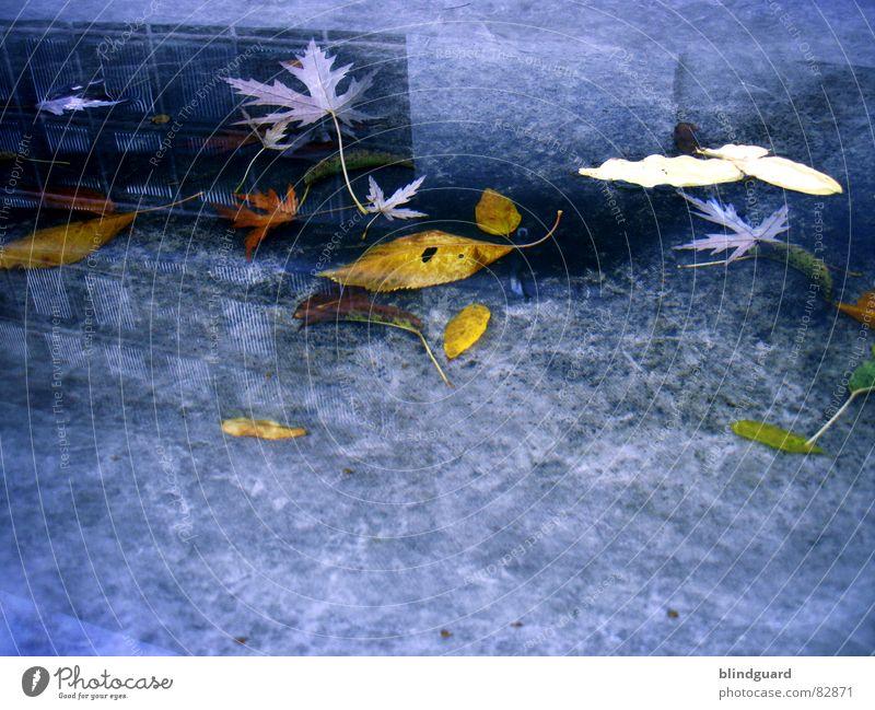 Erderwärmung Reflexion & Spiegelung Pfütze Blatt Herbst Haus Fenster Abdeckung Dach mehrfarbig Vergänglichkeit Mauer Wand Regen trist kalt nass Gewitterregen