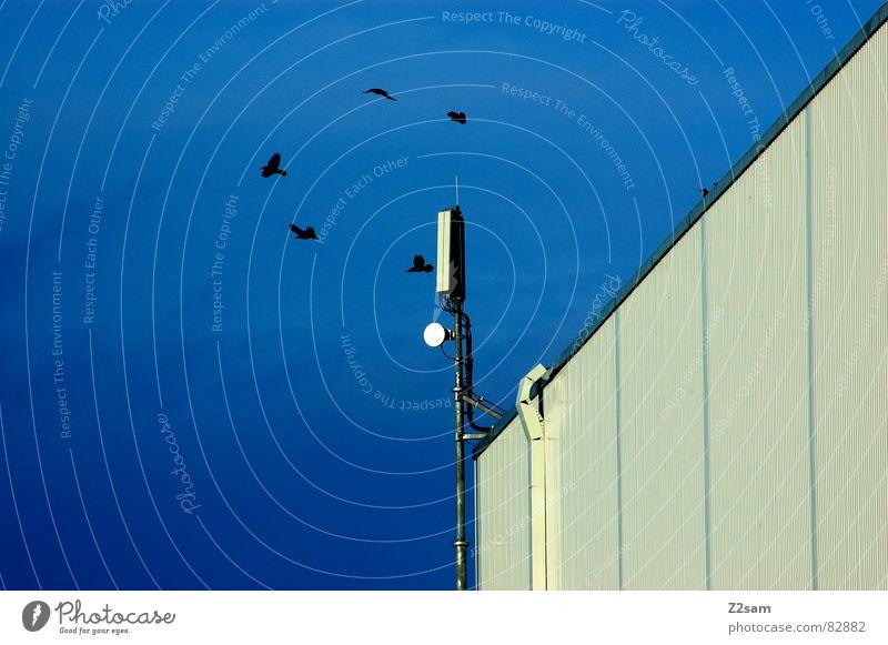 warten auf landeerlaubnis Himmel blau Haus schwarz Gebäude Vogel fliegen rund 5 Geometrie Antenne graphisch kreisen senden Funktechnik