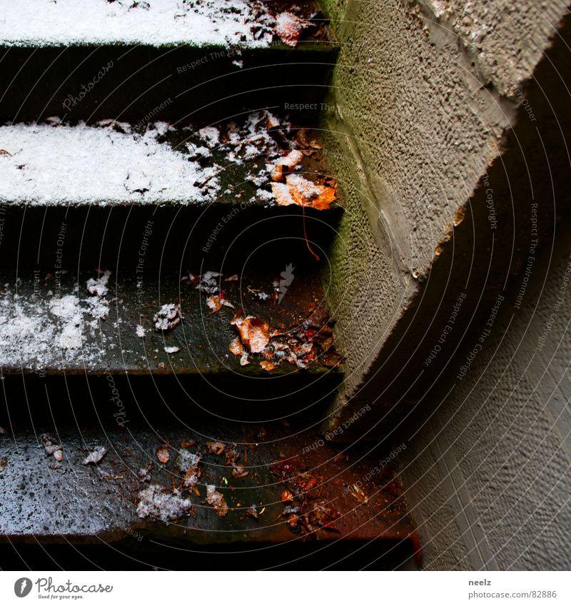 winterzart nass Blatt Wand Jahreszeiten kalt feucht feuchtkalt Mauer frisch Winter Schneeschmelze aufsteigen Eis Treppe kühl und feucht Leiter Bach