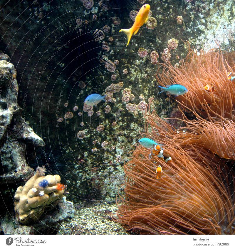 fishtank Fisch Aquarium Wasser Korallen Meeresboden
