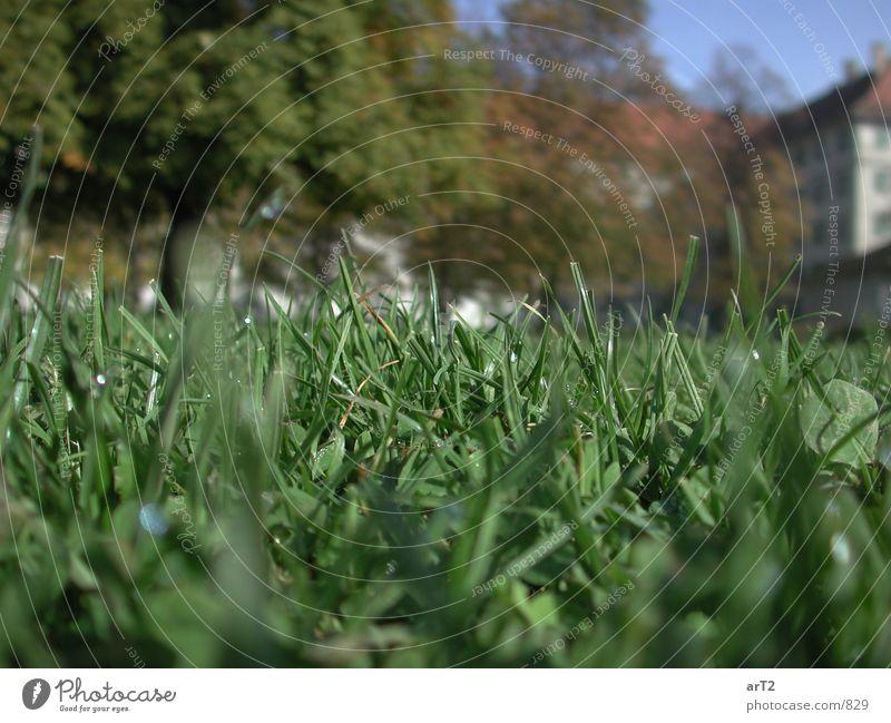 makro.grasgrün Gras Wassertropfen Seil Bodenbelag Makroaufnahme